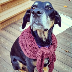 Day 18 #October #yarnpadc Imperfect - this #shawl was supposed to be much larger, made with lace weight yarn. I used worsted and got a fun little triangle #scarf ... Or and Old Lady Lola shawl #dogstagram #dobermanmix
