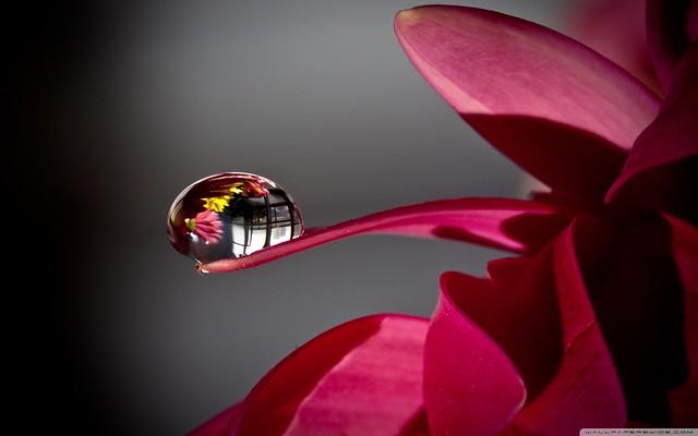 Water Drop Reflection Macro HD Desktop Wallpaper