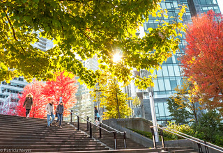 Autumn Colours in Vancouver
