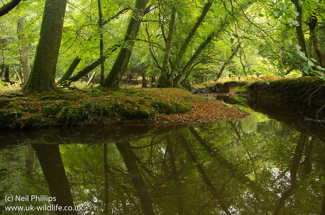 New forest river reflection-11