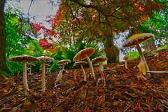 Mushrooms at Point Defiance Park, Tacoma, Washington