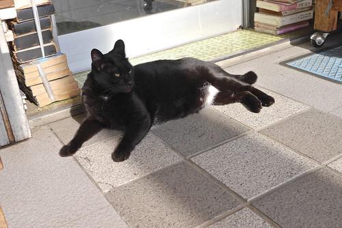 古本屋の店番猫クロタン