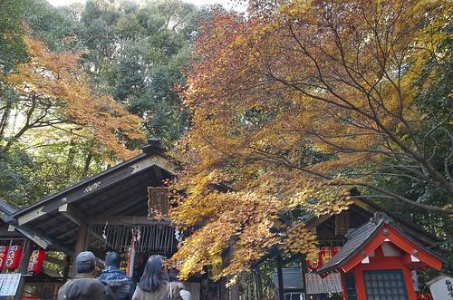 【写真】紅葉 : 野宮神社