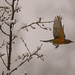 Backyard snow birding on 12/10/13 by wolfkann