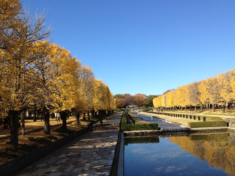 昭和記念公園 Showa Kinen Park-0001