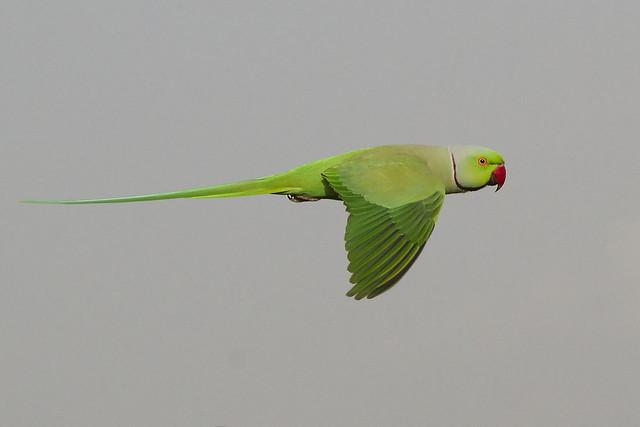beachinrn - Flying