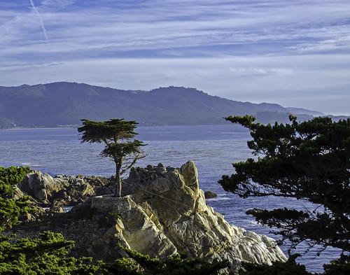 ocean california sky tree clouds landscape 17miledrive cypress lonecypresstree