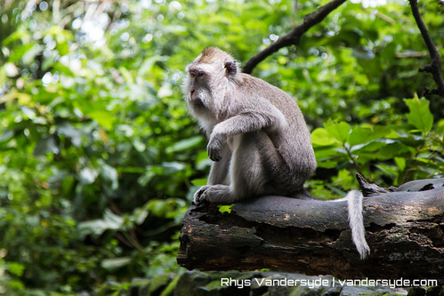 Monkey Forest - Ubud, Bali, Indonesia