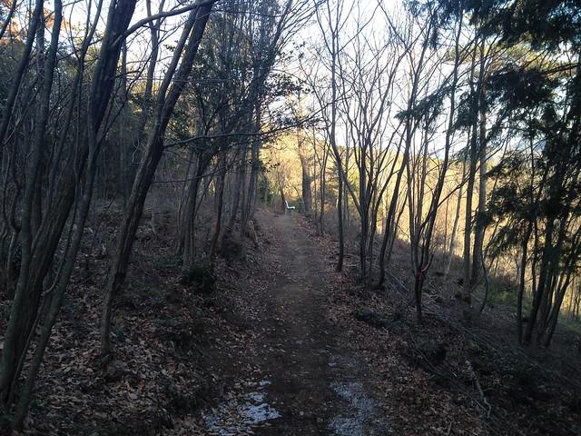 文殊の森 尾根の小道