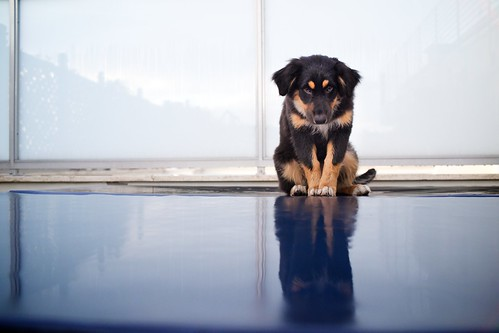 "336/365 - ""Meet Shadow"" nr.2 by Luca Rossini"