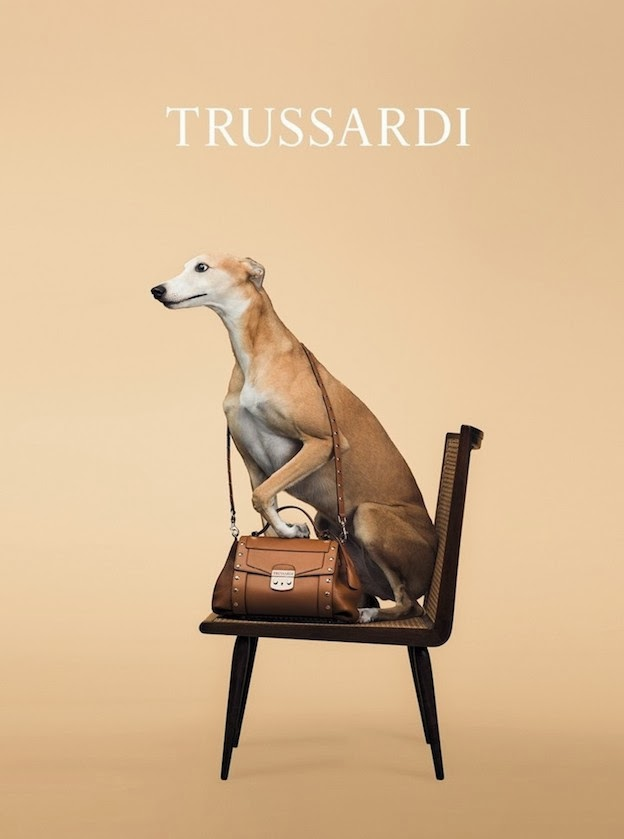 trussardi-campagna-primavera-2014-william-wegman