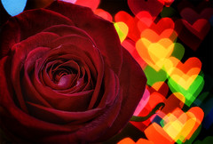"Week 7 of 52 Theme:""Valentine's Day"" Heart Light Rose #LPTG14WK7"