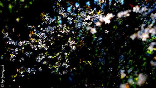 ramo fiorito in raggio di luce