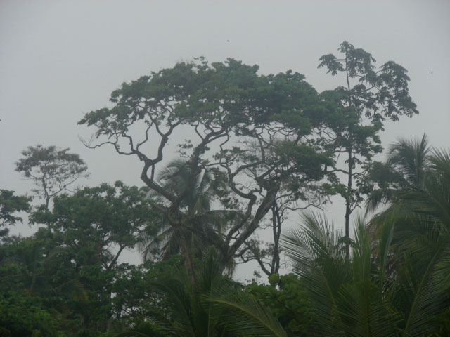 tall-trees-at-the-beach-on-a-rainy-day