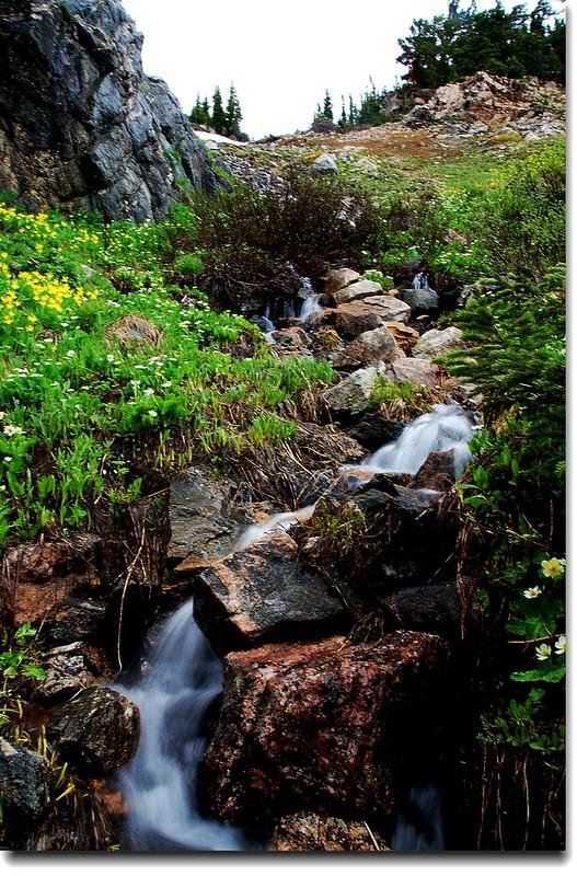Wildflowers and Waterfall 6