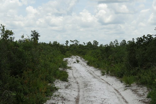 usa florida polkcounty lakewalesridgestateforest lakewalesridge arbuckletract