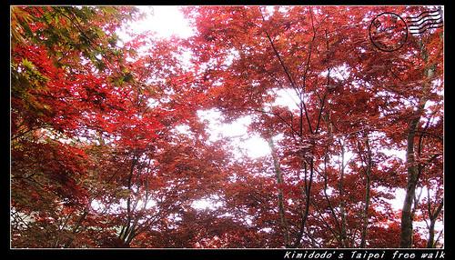 太平山 (7)