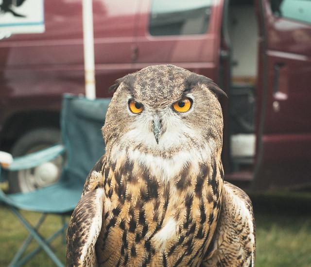 The 26th Annual Harriton Farmstead Fair