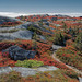 Polly's Cove Trail by Darryl Robertson