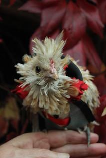 Organic Gothic Vampyre Chick
