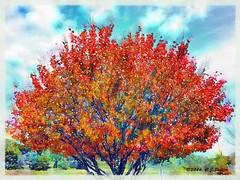 Nature photos & art