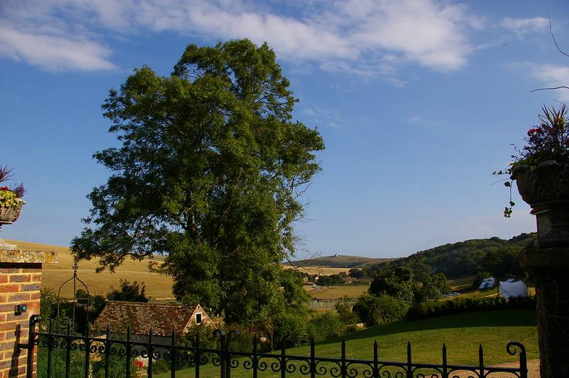 East Dean view, ash tree