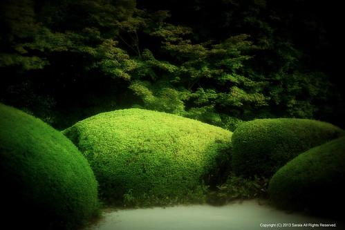 The Japanese garden of summer