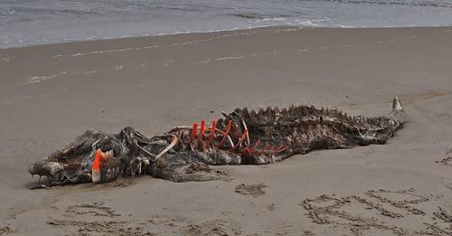Carcass (1)