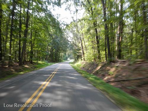 road forest unedited lowrez 2013tour