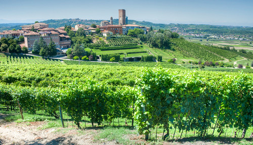 View of Barbaresco and their vines