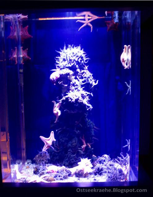 kleines Aquarienbecken