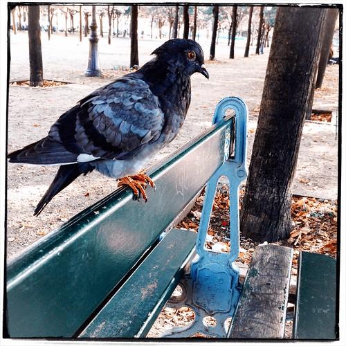 Pigeon Poop Palavers by Paris Set Me Free