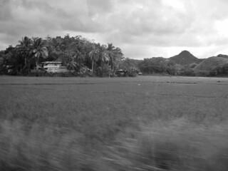 Bohol - countryside