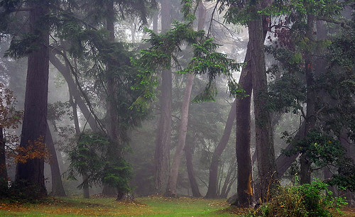 Foggy Morning on Protection Island