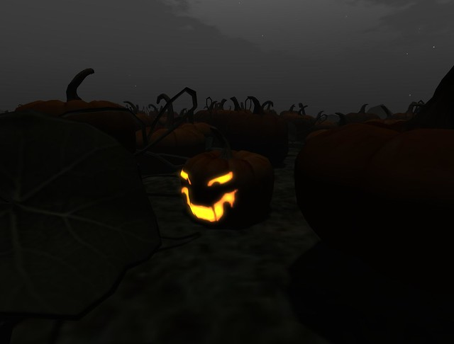 Calico Pumpkin Hunt (1)