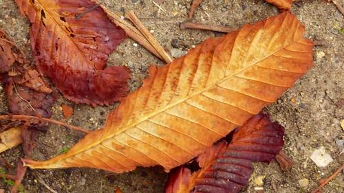 Fall leave width=