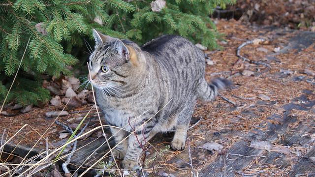 cat walk 3