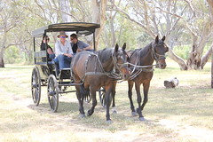 ranch(0.0), trail riding(0.0), mare(1.0), vehicle(1.0), pack animal(1.0), coachman(1.0), horse harness(1.0), horse and buggy(1.0), carriage(1.0), cart(1.0),