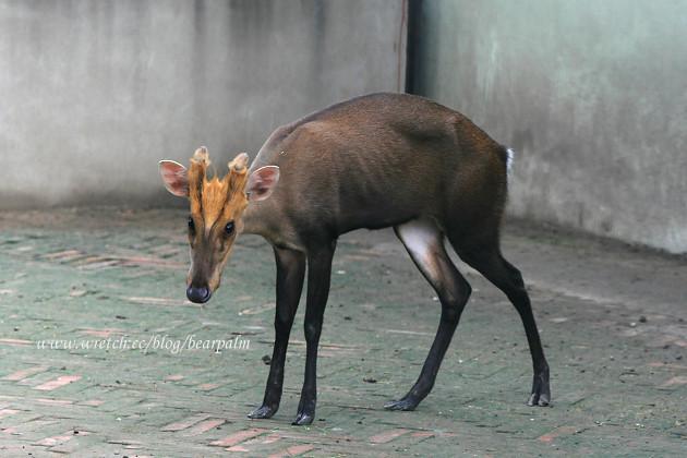 【北京动物园】奇蹄和偶蹄