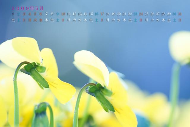写真_2009年5月カレンダー