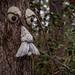 Flintfield Tree Face by rhn3photo