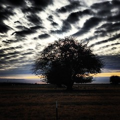 Mulberry silhouette #winter #mulberry #trees #tagsforlikes #ranch #instagood #instanature #instasunrise #outdoors #agriculture #sunset #skyporn #sunrise #silhouette #farm #likeforlike #country #cloudporn #california #chicostatefarm #centralvalleyfarming #