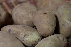 fruit(0.0), vegetable(1.0), potato(1.0), produce(1.0), food(1.0), root vegetable(1.0), tuber(1.0),