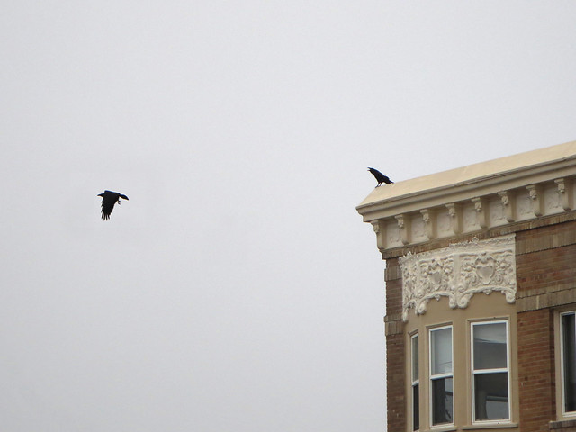 two crows at 26th ave; The Sunset, San Francisco (2014)