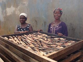 Women drying fish in Takoradi, Ghana