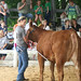 2014 4-H Beef Show