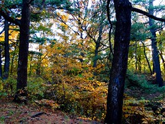 Brookside Preserve - Autumn (44)