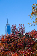 World Trade Center, Autumn, Pigeons, Manhattan