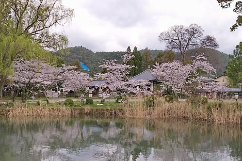 【写真】2013 桜 : 大覚寺/2020-09-15/IMGP9422