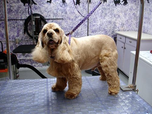 Affordable Dog Grooming Sarnia